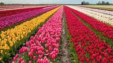 Gambar 12 Foto Taman Bunga Indah Cantik Dunia Inilah