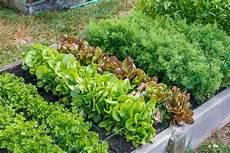 a seasonal guide to sowing growing vegetables payne