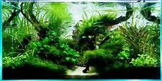 ada aquascape aquarium design 90cm ada aquascape aquarium