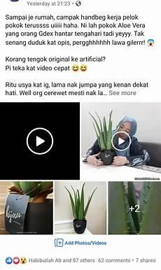 Pokok Hiasan Viral Aloe Vera Artificial Plant