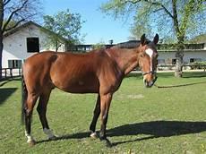 ponys zu verschenken pferde pferd zu verschenken