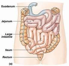 Sistem Pencernaan Hanifah S Science