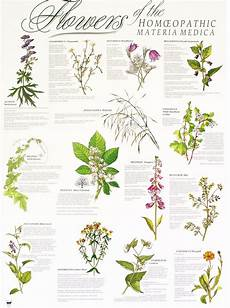 herbal medicines how they work homeopathy medicinal herbs materia medica herbal medicine