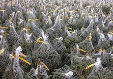 weihnachtsbaum im netz lassen offenburg heimische b 228 ume im angebot noch keinen