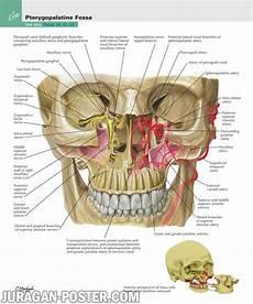 Frank Netter Anatomy 500 Gambar Anatomi Tubuh Archives