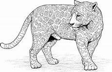 ausmalbild jaguar tier kostenlos t schirt malvorlagen
