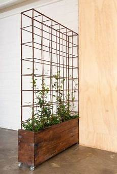 the 11 best small studio apartment room dividers plants
