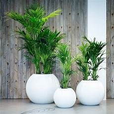 raumbegr 252 nung innenraumbegr 252 nung baumhaus pflanzenpflege