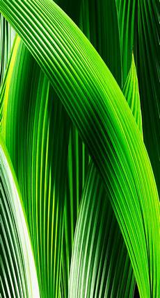 iphone wallpaper green ios 7 wallpapers for iphone and ipod touch