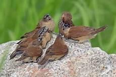 Satuan Makhluk Hidup Dalam Ekosistem Biologic