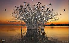 Pantanal Wetlands Of The Birds National Geographic Photo