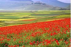 paesaggi fioriti prati fioriti prati