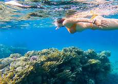bbq luxury snorkeling tour fajardo east island excursions