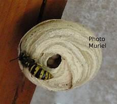 petit nid de guepe mot cl 233 gu 234 pe bienvenue dans mes jardins