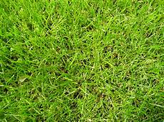 Der Rasen Danielas Gartenbau