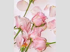 8 best glossier wallpapers images on Pinterest   Iphone