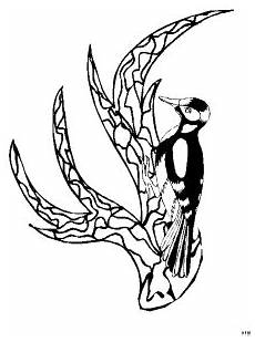 Malvorlage Vogel Auf Ast Vogel Auf Verziertem Ast Ausmalbild Malvorlage Tiere