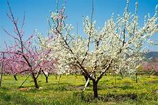 when do apple trees bloom seeing visible growth on your