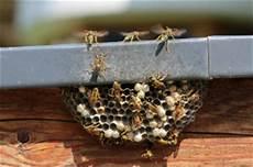 wespennest entfernen kosten bewertet de