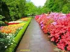 dei fiori bikiniworld il linguaggio dei fiori