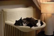 amaca gatti amaca gatto tutto ze 30550