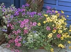 plante terrasse plein soleil plantes de soleil pour jardini 232 res estivales plantes des