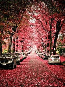 vancouver bc canada beautiful in the spring time beautiful places places