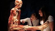 Zygote Belajar Anatomi Tubuh Manusia