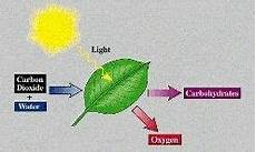 in what form do plants store energy quora