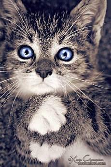 Katzen Malvorlagen Quest Katzen Malvorlagen Quest Amorphi