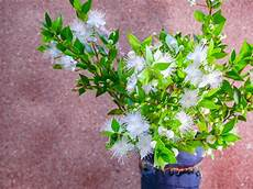 blumen schenken bedeutung hochzeitsblumen bedeutung der blumen zur hochzeit