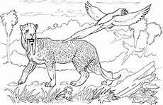 Ausmalbilder Tiere Tiger Ausmalbilder Kostenlos Tiger Ausmalbilder