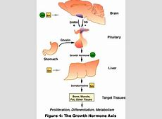 all functions of the liver