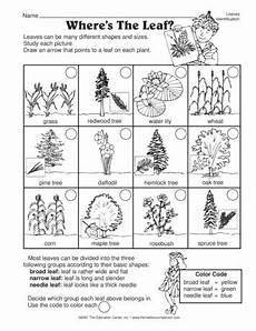 science worksheets leaves 12281 a great science worksheet for a study of leaves and leaf identification leaf identification