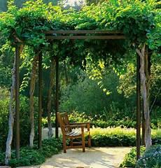 Pergola Bepflanzen Welche Kletterpflanzen Eignen Sich