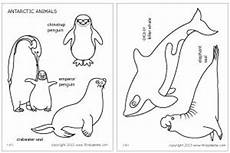 arctic animals coloring pages 16891 antarctic animals coloring page continent box antarctica