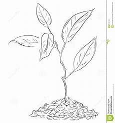 figure twigs sprout stock vector illustration of natural 31167911