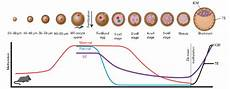 methylation dynamics during normal early embryonic development and in download scientific