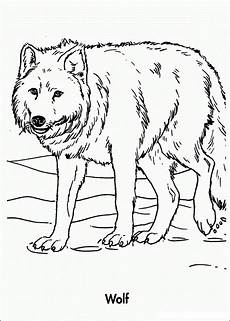 free printable wolf coloring pages for wolf colors