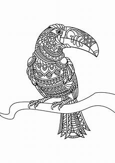 vogel 42328 v 246 gel malbuch fur erwachsene