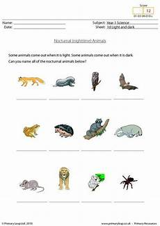 science worksheet year 1 12489 year 1 science nocturnal animals primary resources from www primaryleap co uk science
