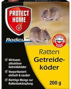 tote ratte entsorgen protect home rodicum ratten getreidek 246 der protect