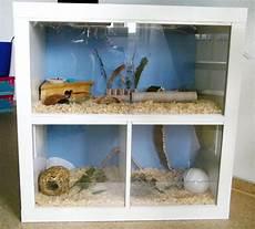 gehege für igel 220 bergangswohnung hamsterauslauf ideen hamster ideen