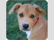 Joey & Dougie   Adopted Puppy   Mora, MN   Corgi/Boxer Mix