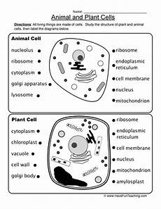 animal cell worksheets 14058 animal and plant cells worksheet teaching