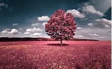 Wallpaper Laptop Pink