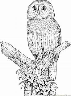 Malvorlagen Eulen Gratis Perched Barred Owl Coloring Page Free Printable Coloring
