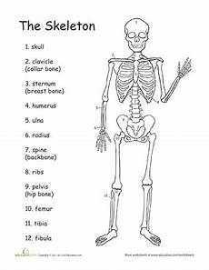 awesome anatomy bone s to pick science worksheets 4th