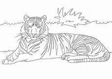 tiger coloring page template world