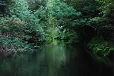Gambar Pohon Alam Cabang Sinar Matahari Daun Sungai